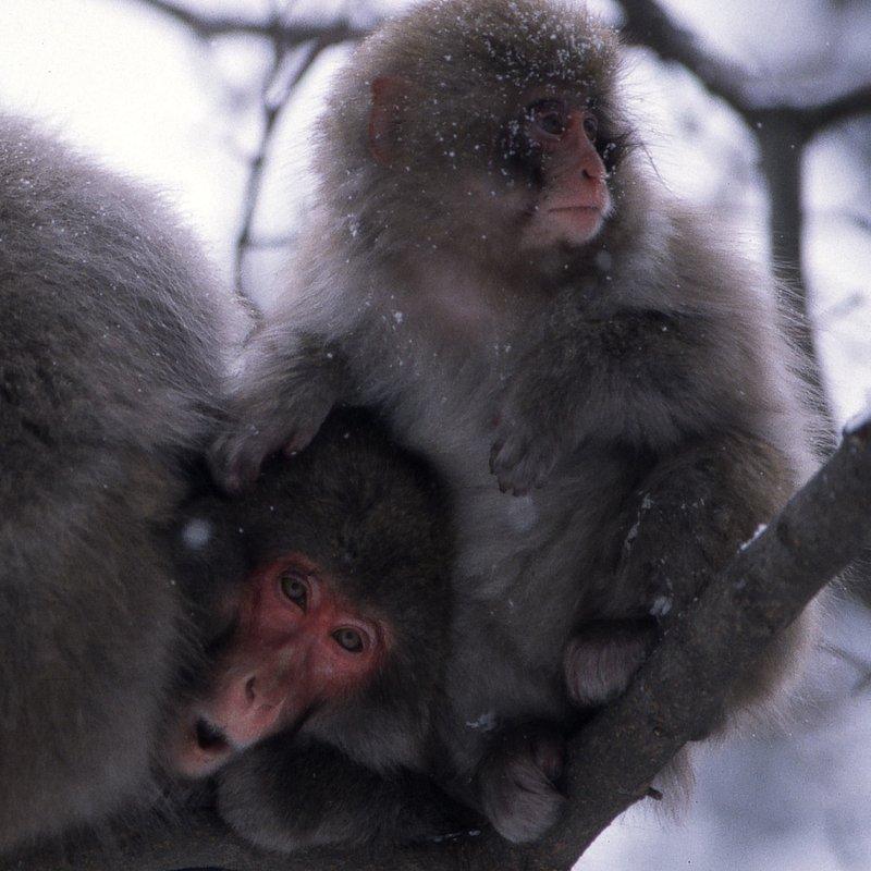 Tajemnice dzikiej Azji_National Geographic Wild (10).JPG