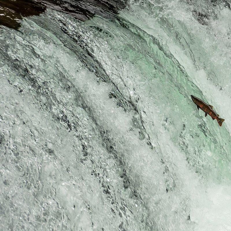 Tajemnice dzikiej Azji_National Geographic Wild (6).jpg