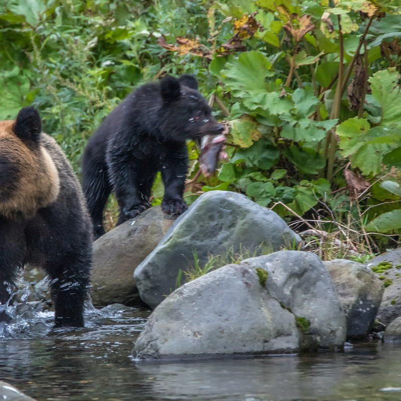 Tajemnice dzikiej Azji_National Geographic Wild (5).jpg