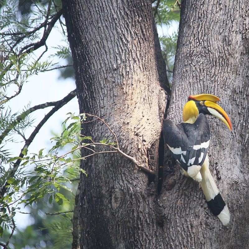 Tajemnice dzikiej Azji_National Geographic Wild (3).jpg