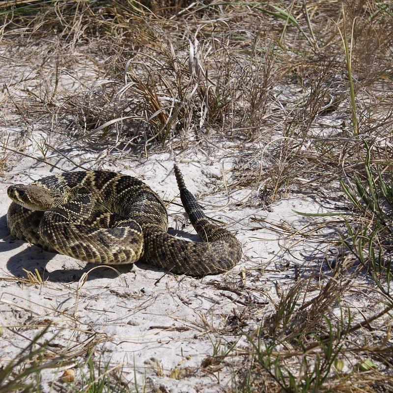 Zabójcze żmije_National Geographic Wild (7).jpg