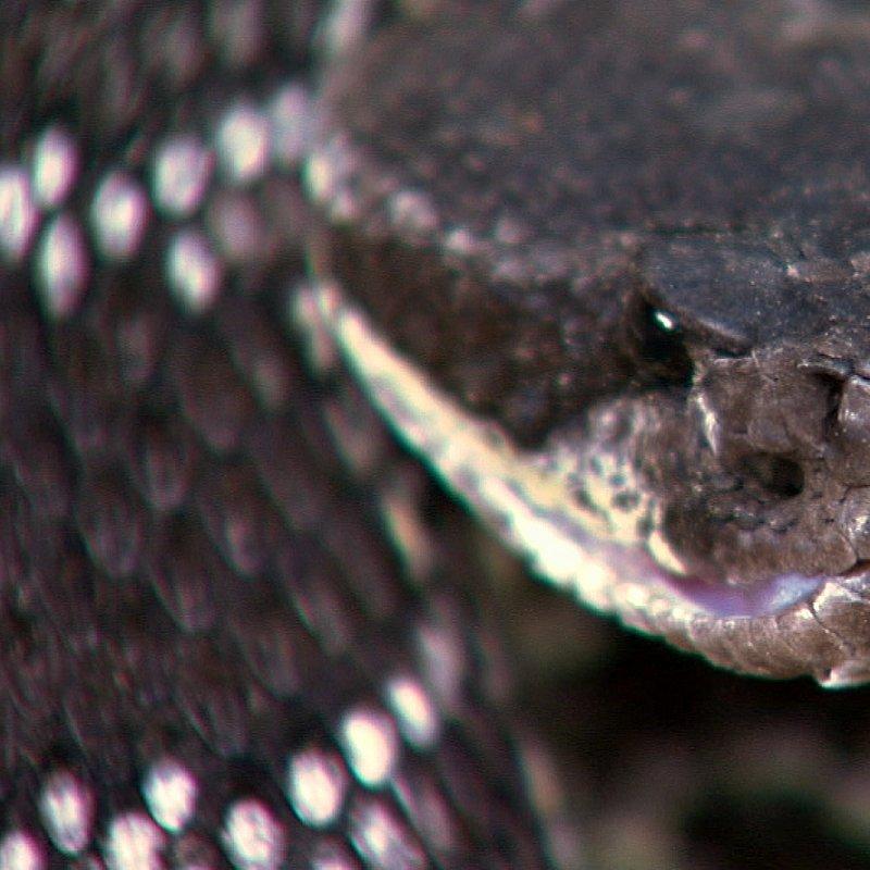 Zabójcza rodzina_National Geographic Wild (7).JPG