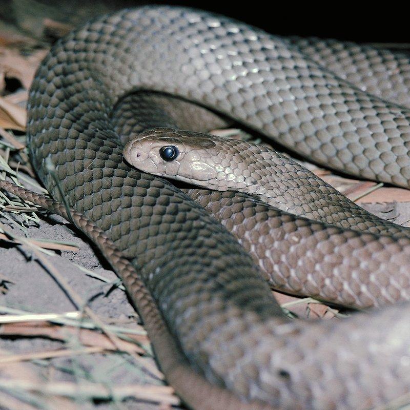 Zabójcza rodzina_National Geographic Wild (1).tif