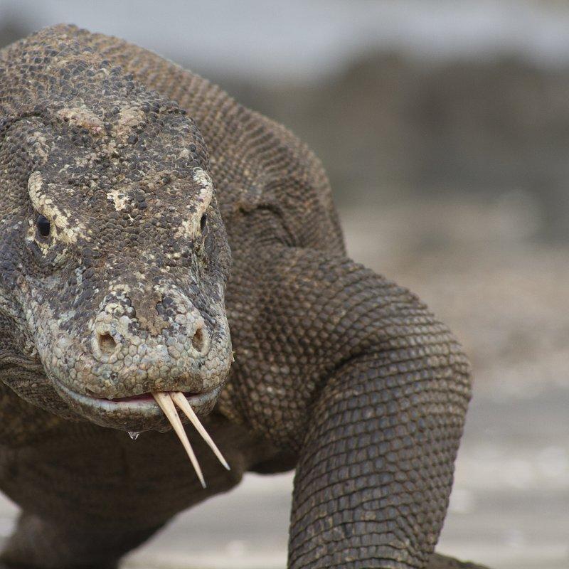 Zabójcza rodzina_National Geographic Wild (3).JPG