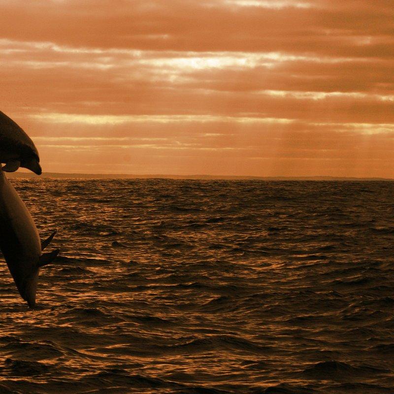 Dynastia delfinów_National Geographic Wild (1).jpg