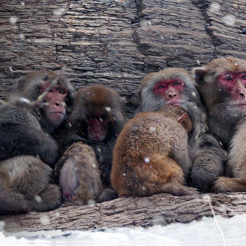 Makaki_rodzinna więź_National Geographic Wild (2).jpg