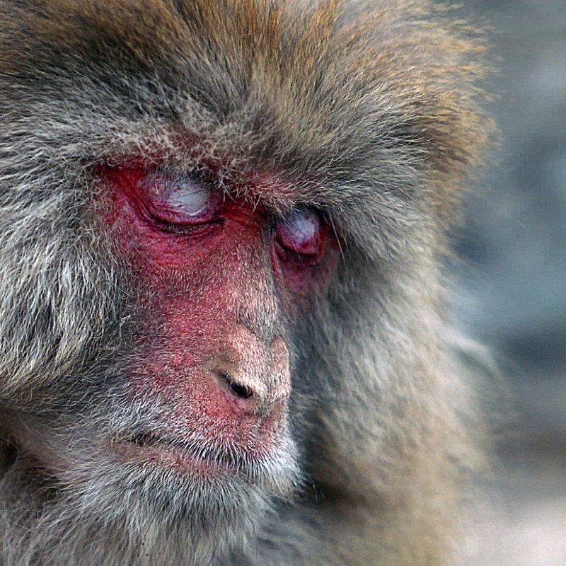 Makaki_rodzinna więź_National Geographic Wild (1).jpg