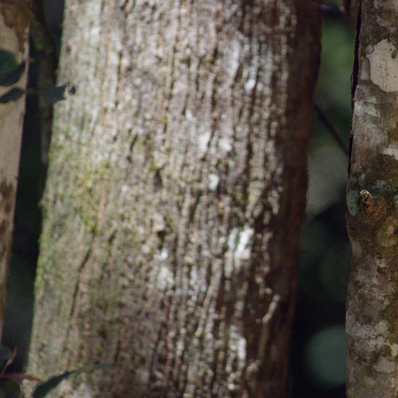 Niezwykłe kazuary_National Geographic Wild (2).jpg