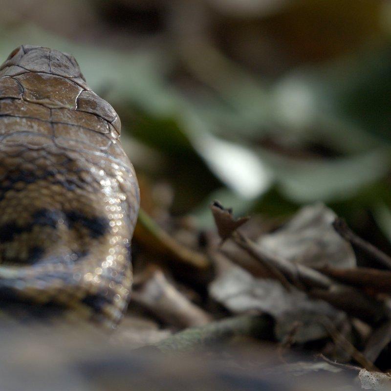 Niezwykłe kazuary_National Geographic Wild (3).jpg