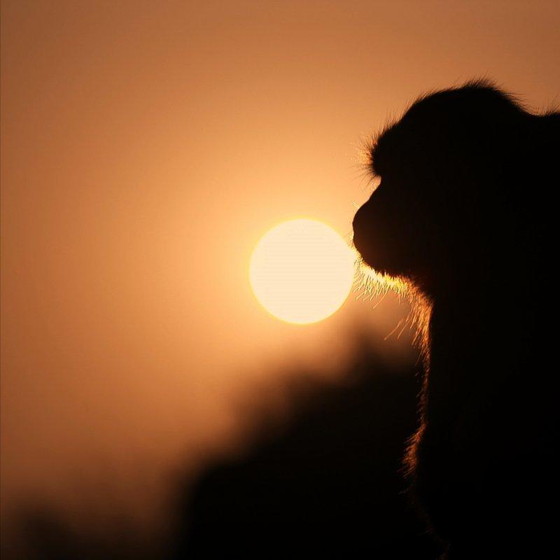 Makaki_rodzinna więź_National Geographic Wild (1).tif
