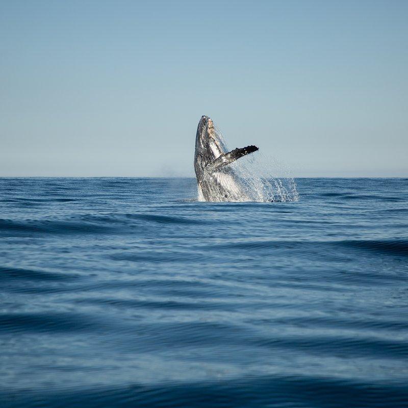 Rekin kontra waleń_National Geographic Wild (2).jpg