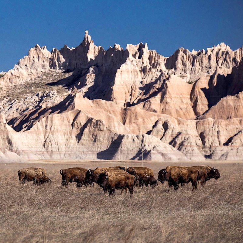 Tylko dla zuchwałych_National Geographic Wild (3).jpg