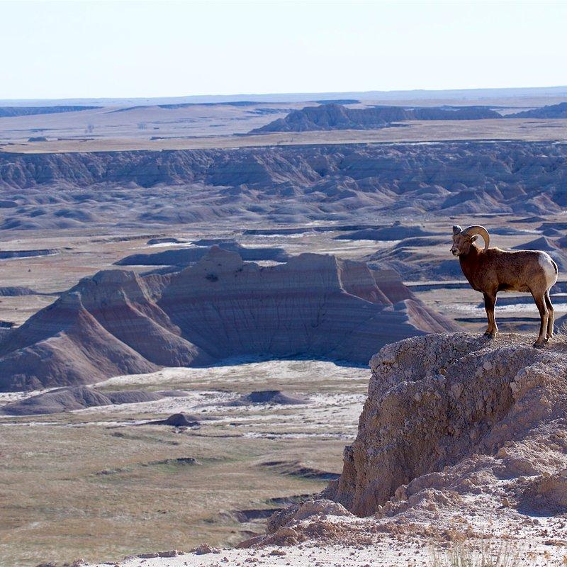 Tylko dla zuchwałych_National Geographic Wild (5).jpg