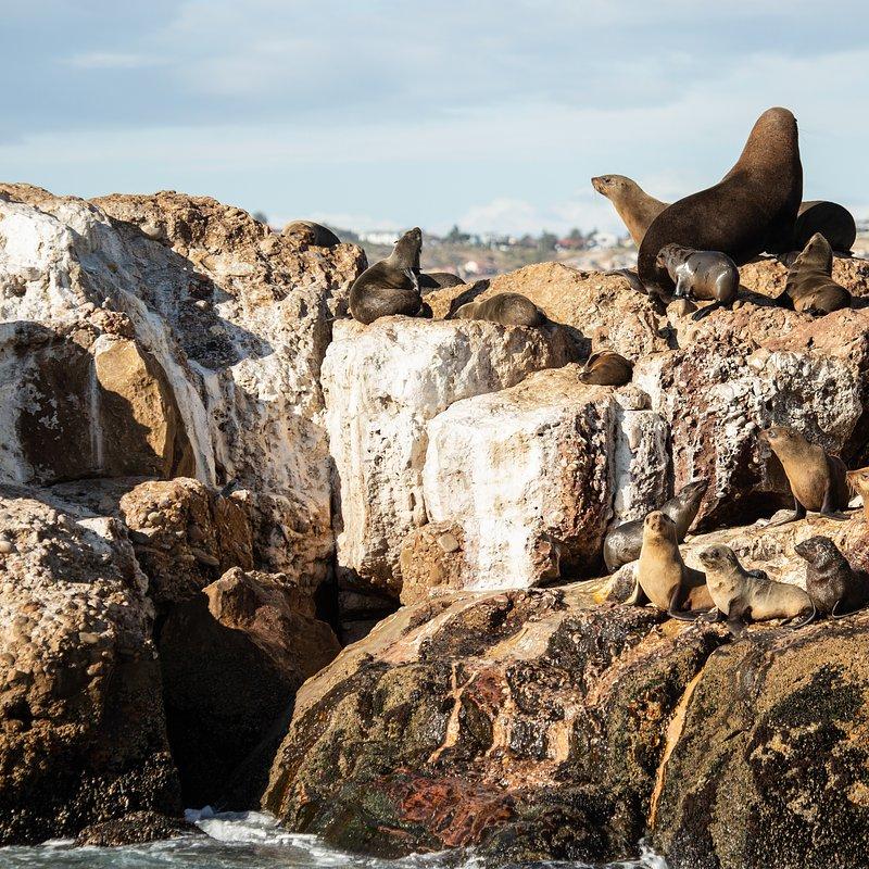 Rekin kontra waleń_National Geographic Wild (3).jpg