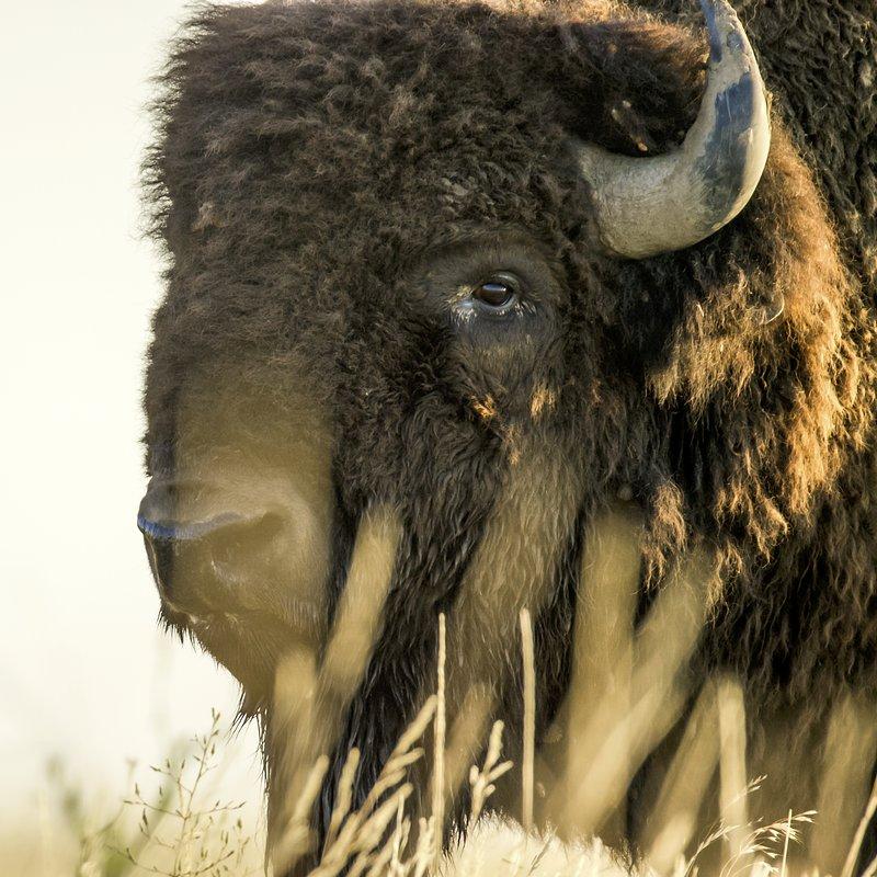 Tylko dla zuchwałych_National Geographic Wild (4).jpg