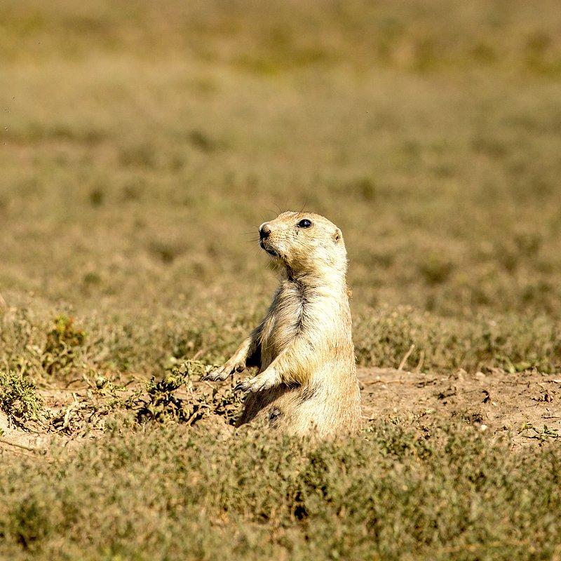 Tylko dla zuchwałych_National Geographic Wild (7).jpg