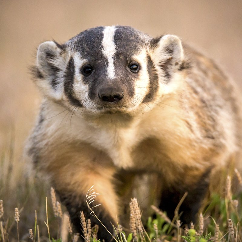 Tylko dla zuchwałych_National Geographic Wild (6).jpg