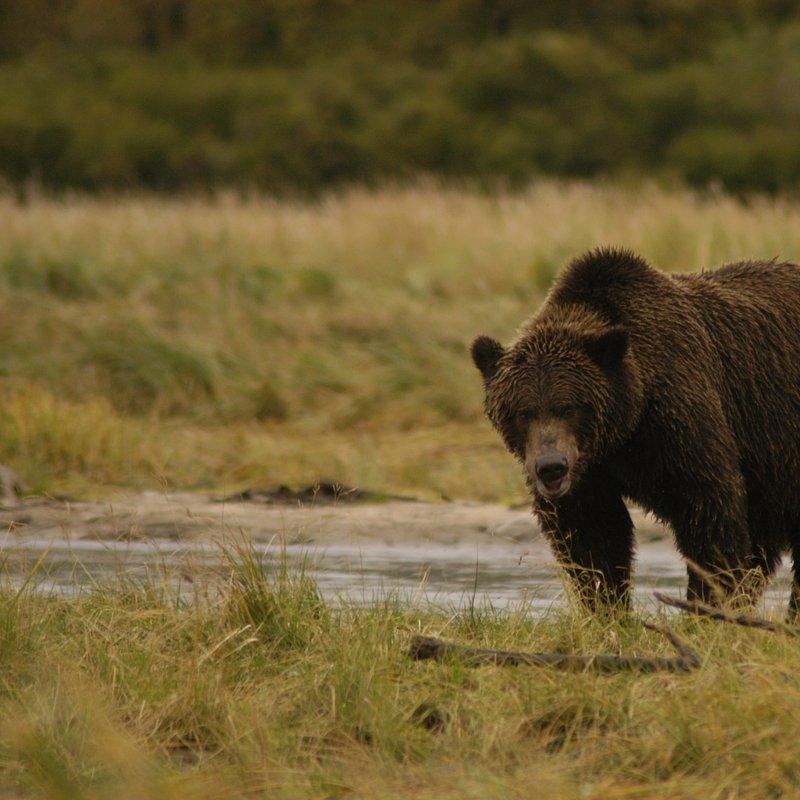 cykl specjalny_Drapieżny miesiąc_National Geographic Wild (6).jpg