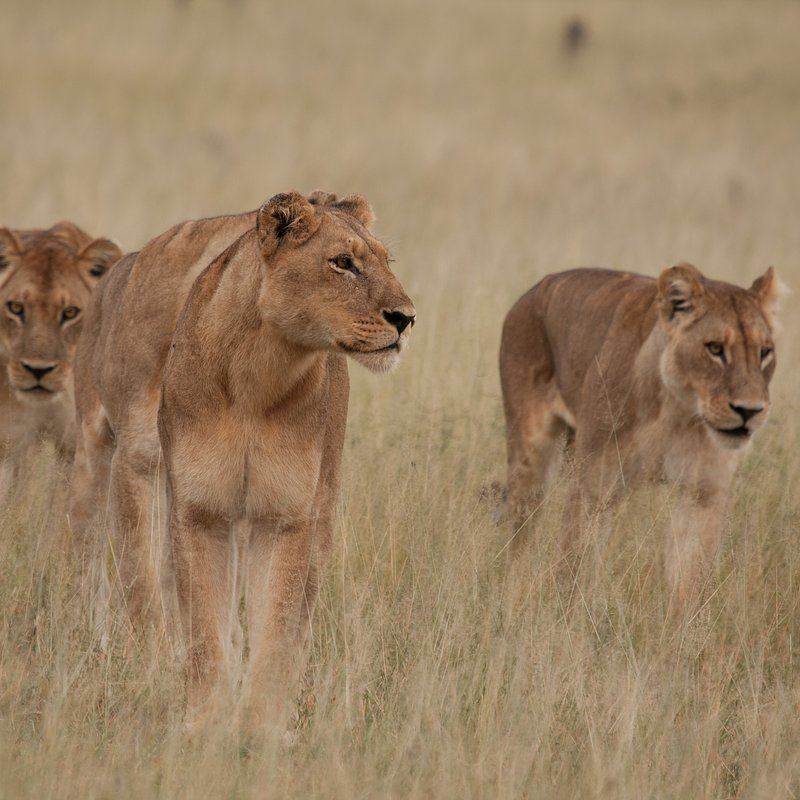 cykl specjalny_Drapieżny miesiąc_National Geographic Wild (1).jpg