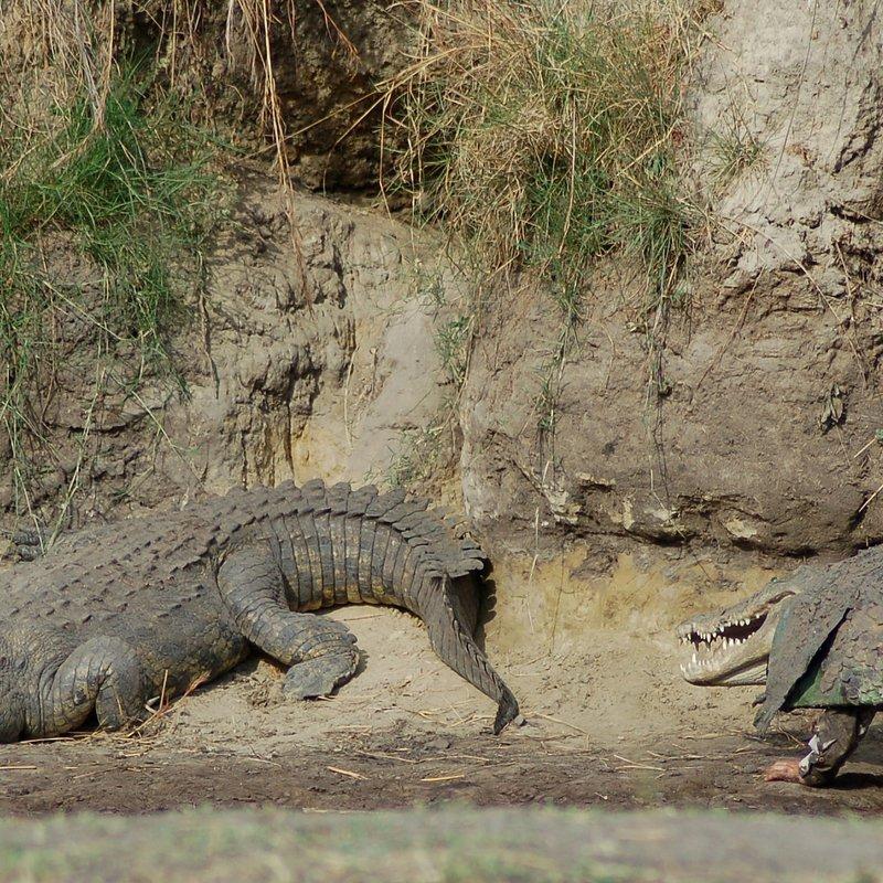 cykl specjalny_Drapieżny miesiąc_National Geographic Wild (7).jpg