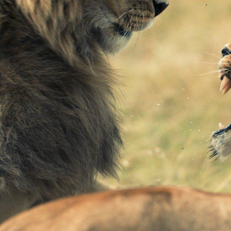 cykl specjalny_Drapieżny miesiąc_National Geographic Wild (14).jpg
