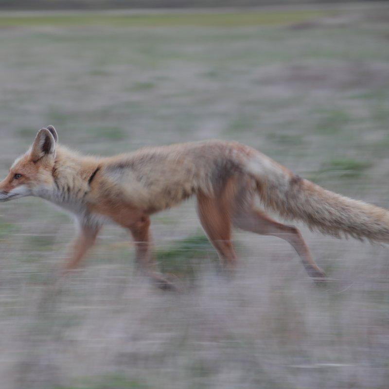 cykl specjalny_Drapieżny miesiąc_National Geographic Wild (15).jpg