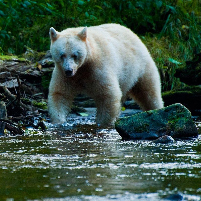 cykl specjalny_Drapieżny miesiąc_National Geographic Wild (11).jpg