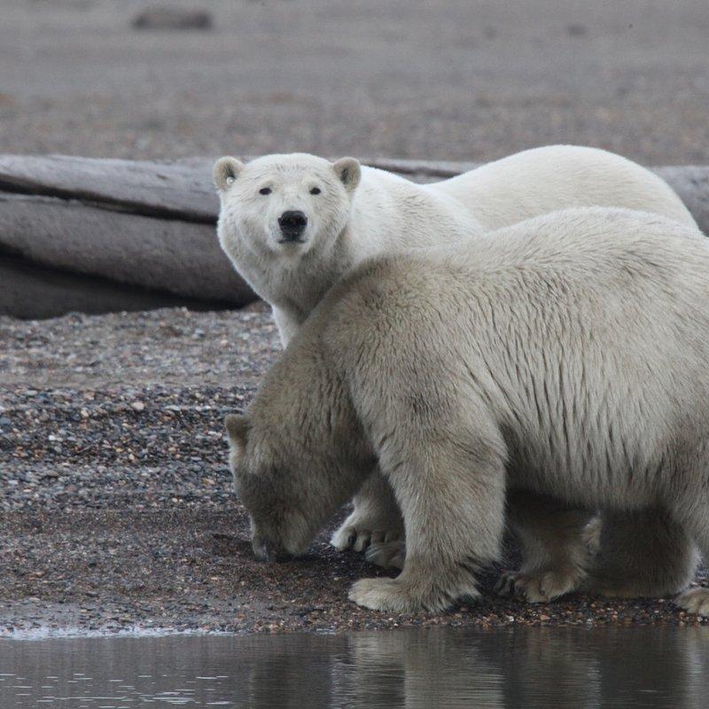 cykl specjalny_Drapieżny miesiąc_National Geographic Wild (16).jpg