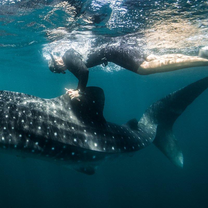 Strażnicy oceanów w National Geographic_Brad Norman (4).tif