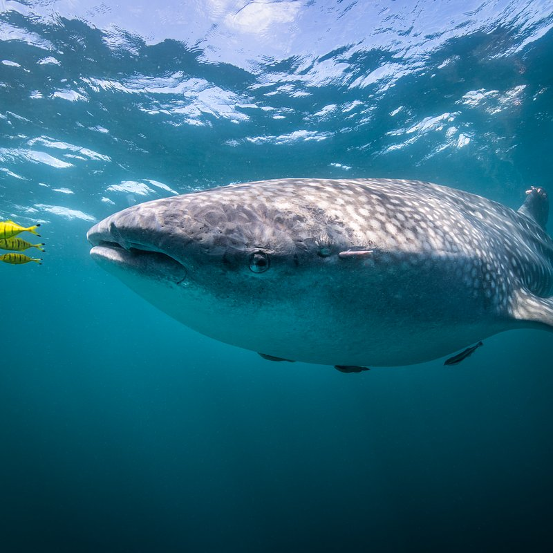 Strażnicy oceanów w National Geographic_Brad Norman (3).tif