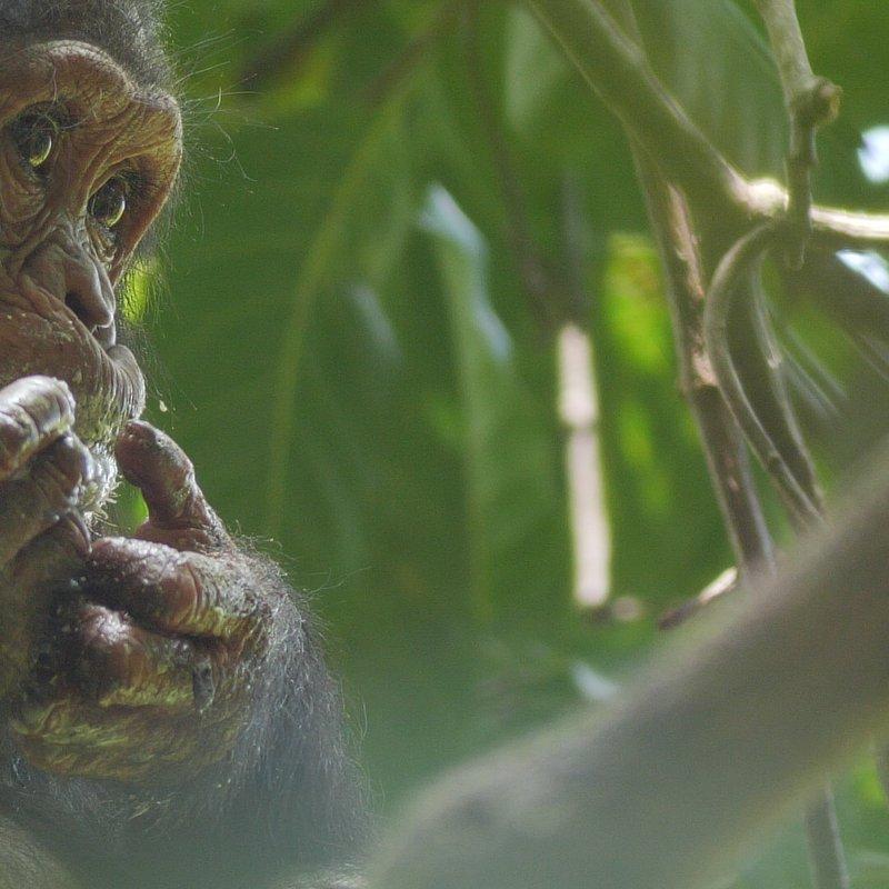 JaneGoodall_nadzieja na przyszłość_National Geographic Wild (10).JPG