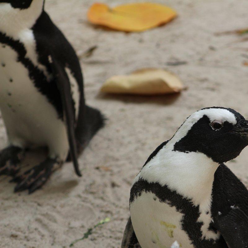 Sekrety zoo_pingwiny_National Geographic Wild (4).jpg