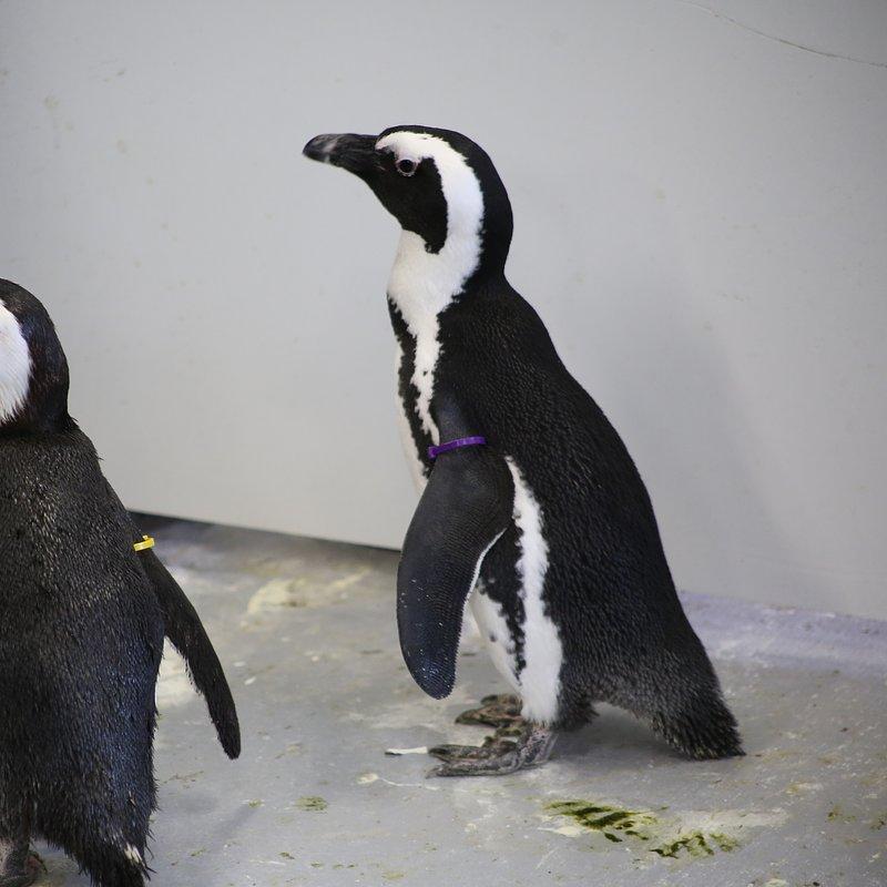 Sekrety zoo_pingwiny_National Geographic Wild (2).jpg