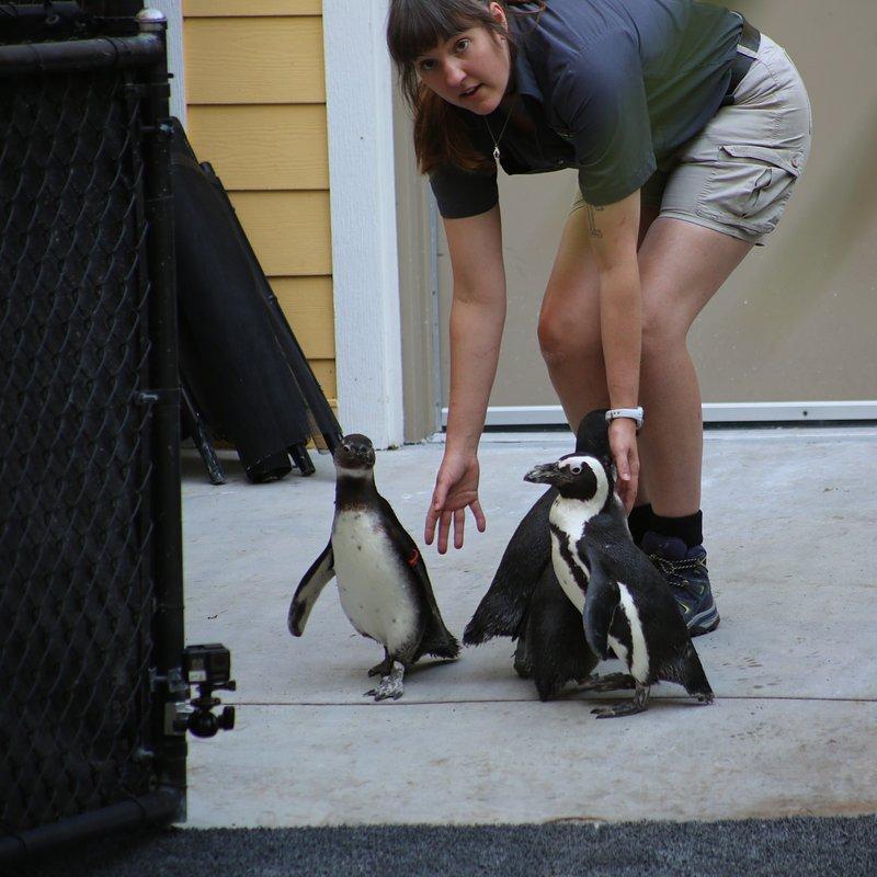 Sekrety zoo_pingwiny_National Geographic Wild (1).jpg