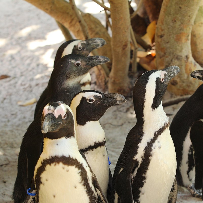 Sekrety zoo_pingwiny_National Geographic Wild (6).jpg