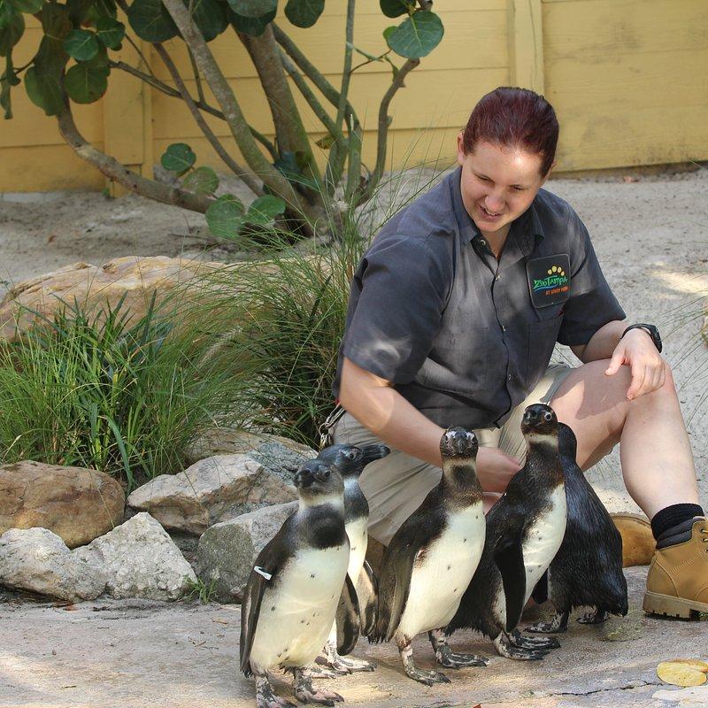 Sekrety zoo_pingwiny_National Geographic Wild (3).jpg