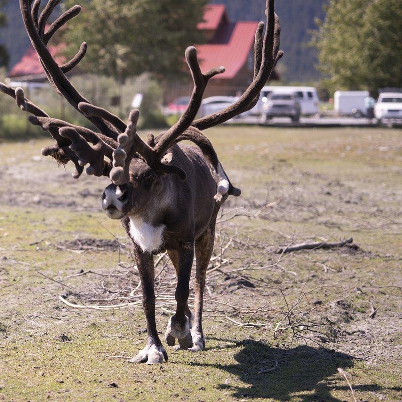 Weterynarz z powołania_drużyna dr Oakley_National Geographic Wild (1).jpg