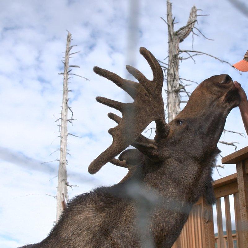 Ratownicy z Alaski_National Geographic Wild 8.jpg