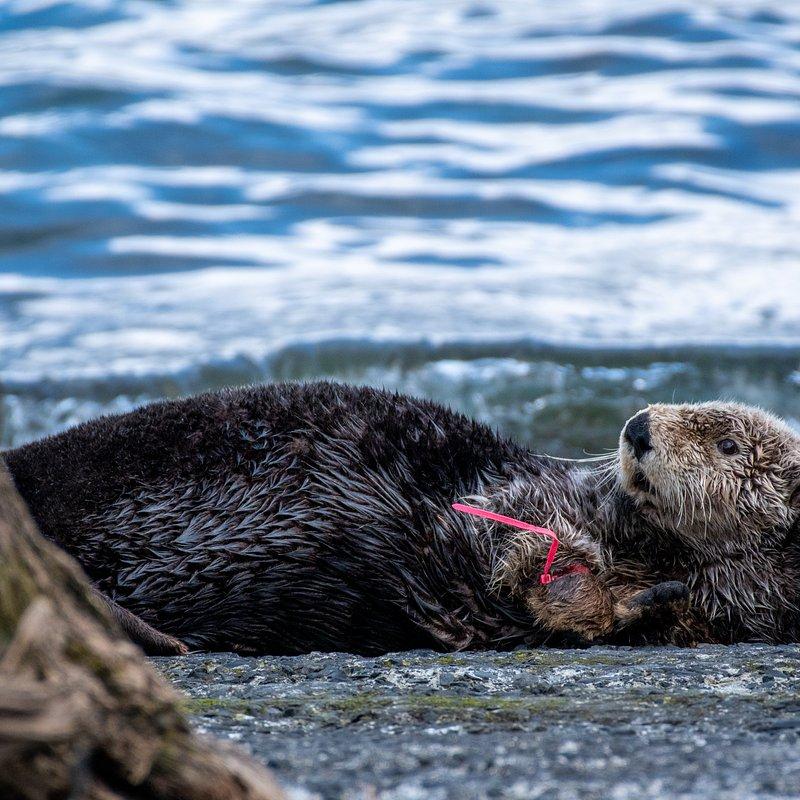 Ratownicy z Alaski_National Geographic Wild 9.jpg