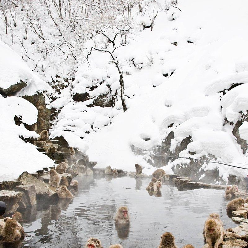 Rok w dzikiej Japonii_National Geographic (2).jpg