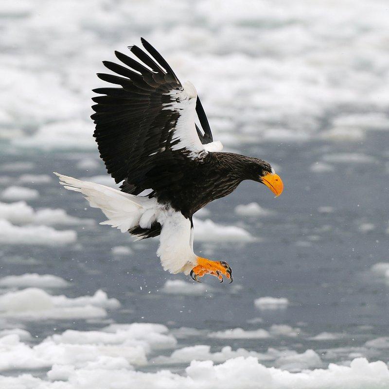 Rok w dzikiej Japonii_National Geographic (3).jpg