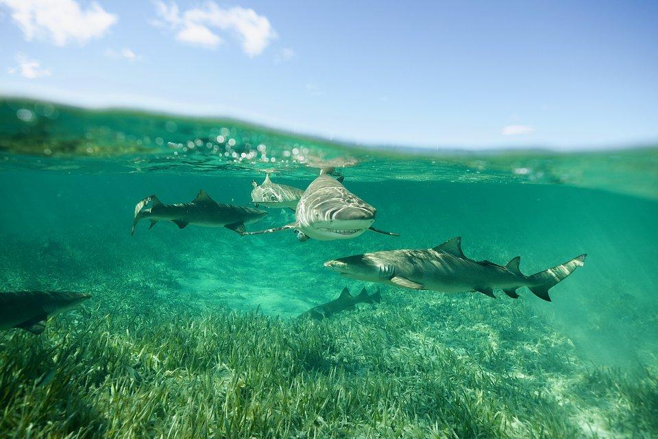SharkGangs_50.jpg