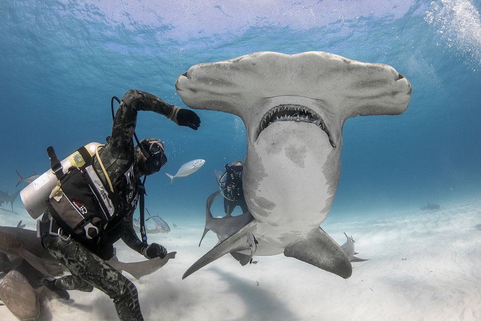 Ep104_ManVShark_SharkAttackFiles_19.JPG