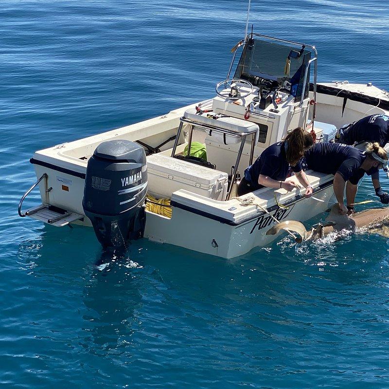 SharkAttackInvestigation_ThePaigeWinterStory_13.jpeg
