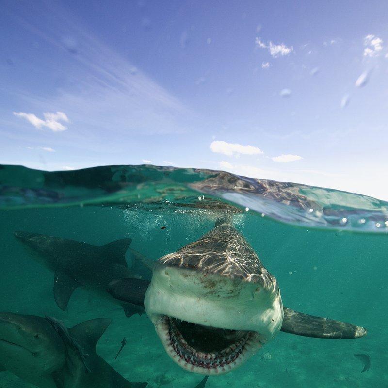 SharkGangs_16.jpg