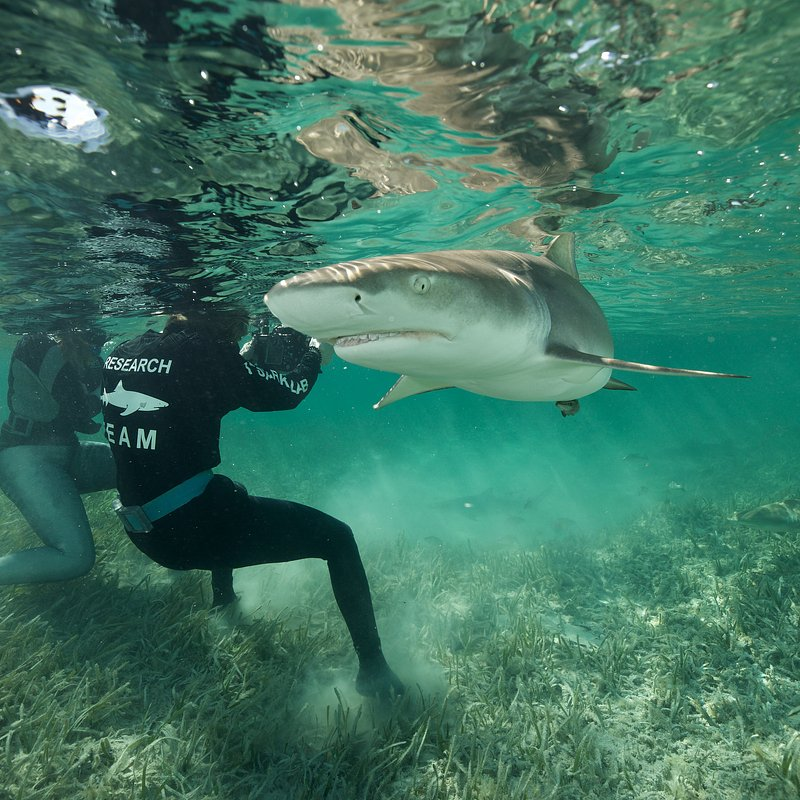 SharkGangs_54.jpg