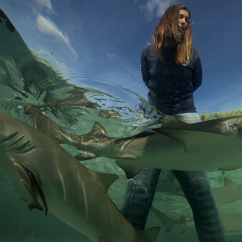 SharkGangs_25.jpg