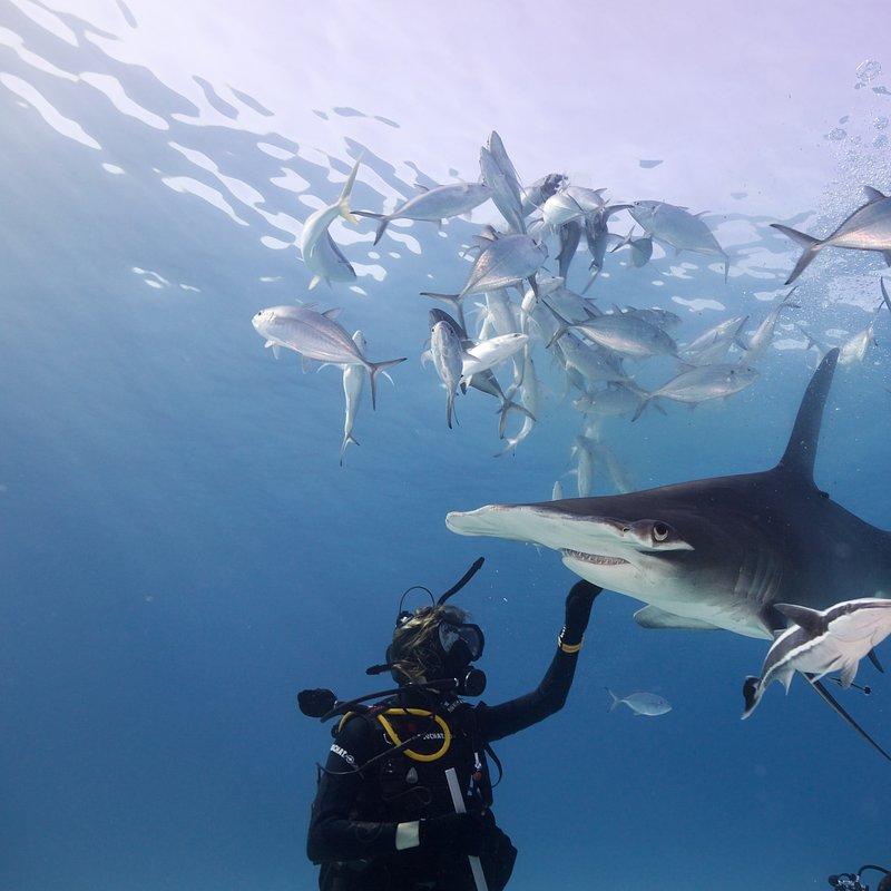 SharkGangs_46.jpg