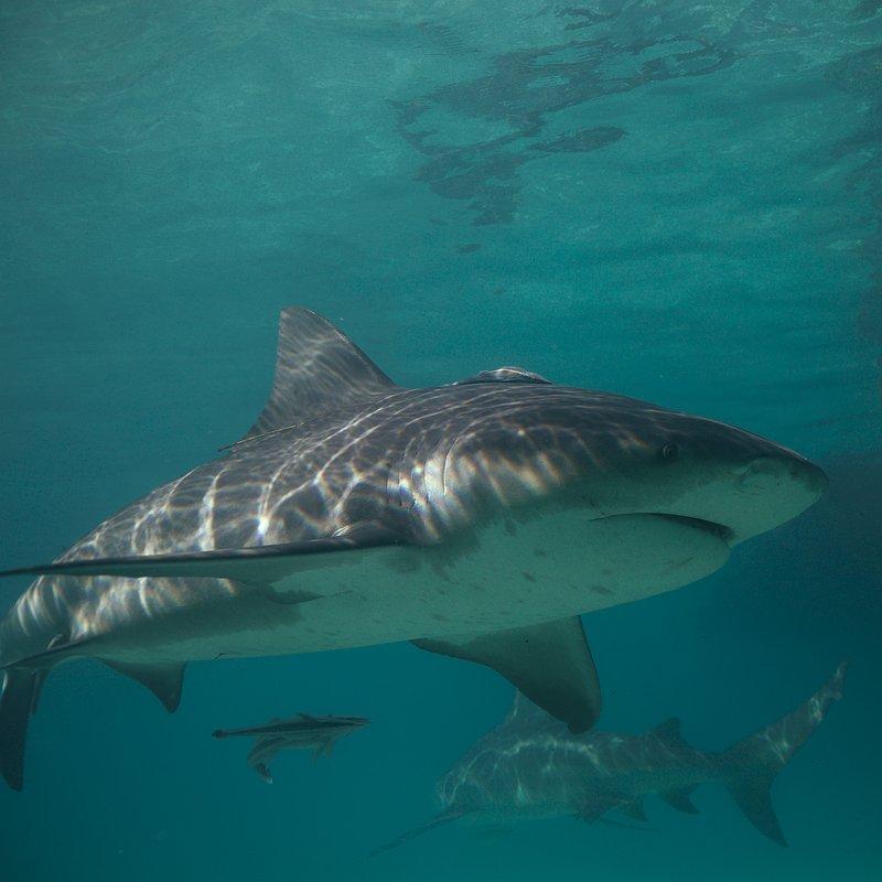 SharkGangs_12.jpg