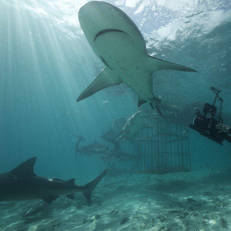 SharkGangs_10.jpg